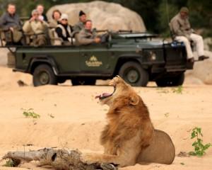 Savanna Private Game Reserve, Sabi Sands